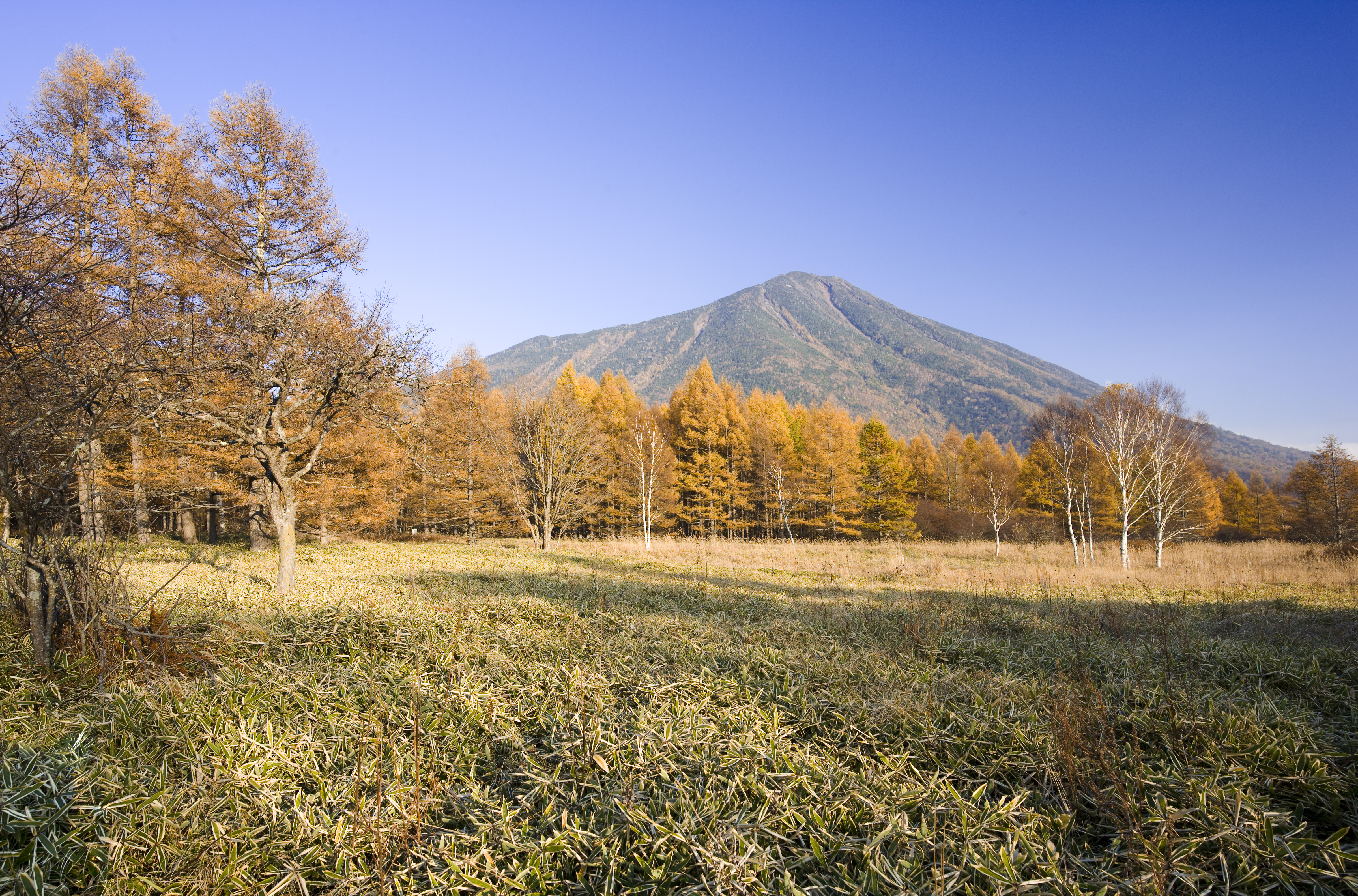 photo,material,free,landscape,picture,stock photo,Creative Commons,Senjogahara in late fall, Bamboo grass, Colored leaves, Yellow, blue sky