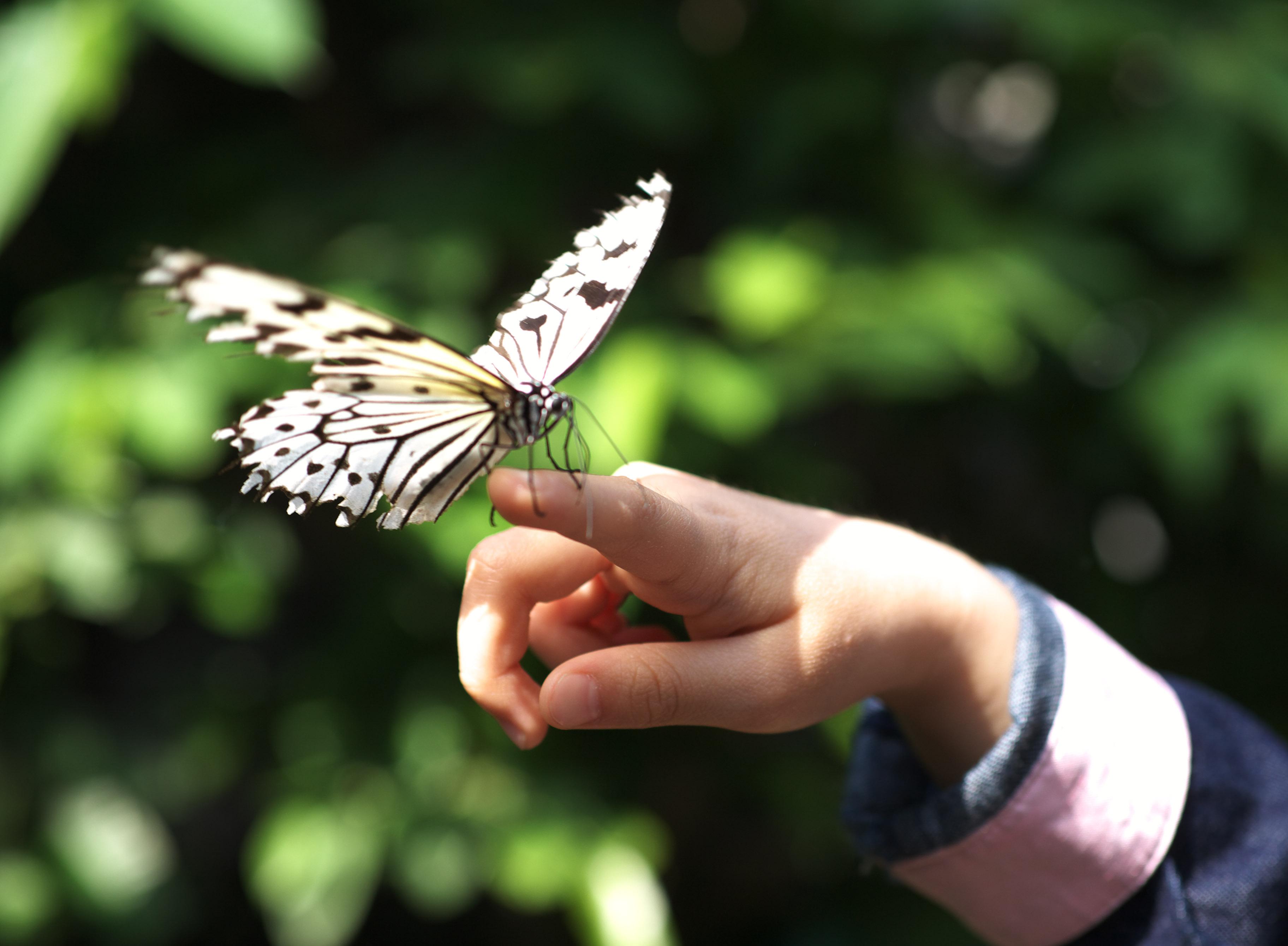 写真,素材,無料,フリー,フォト,クリエイティブ・コモンズ,風景,壁紙,少女と蝶, チョウ, ちょうちょ, 蝶, 花