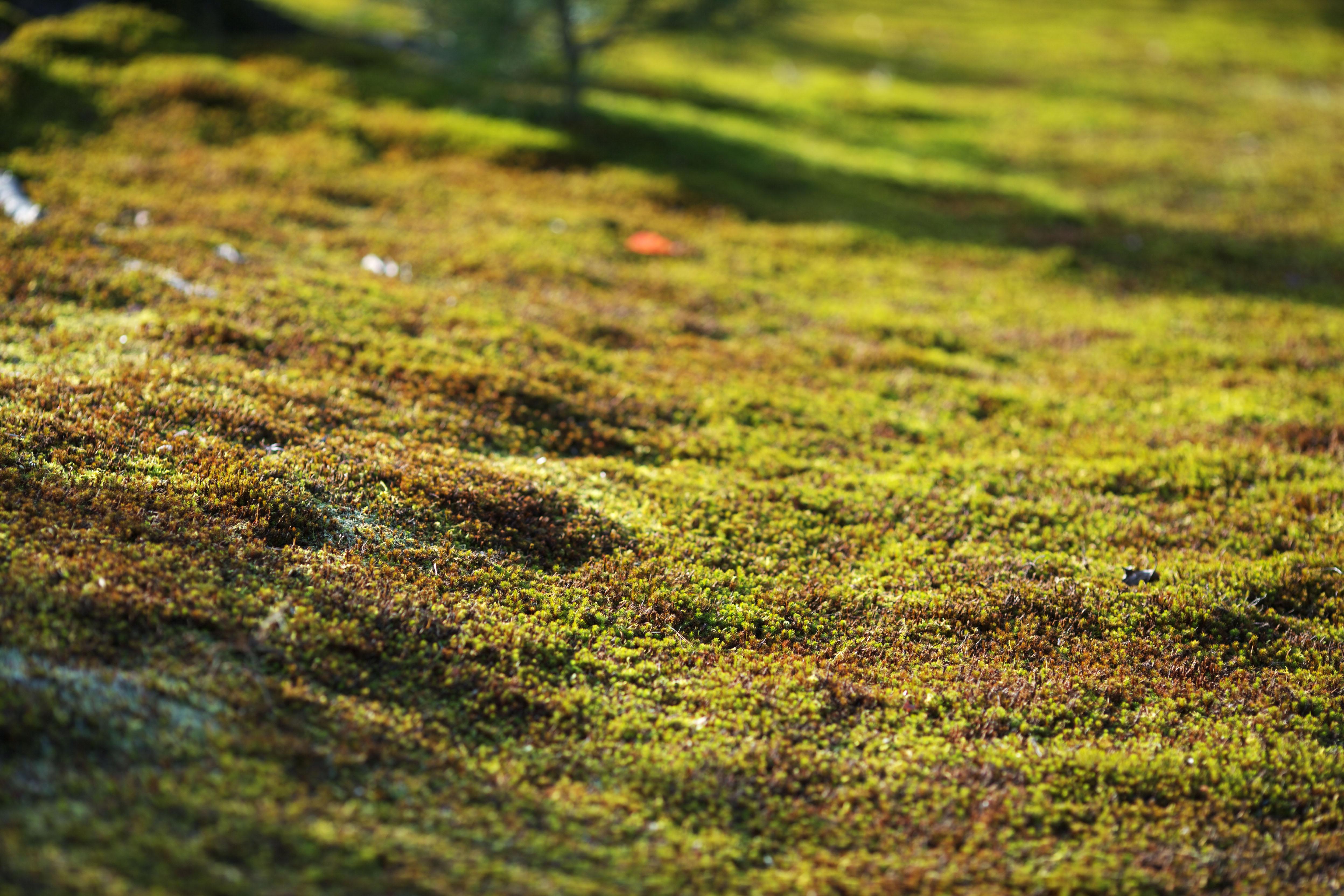 Yun freie Aktienfotos  No 5714 Ein Teppich aus Moos