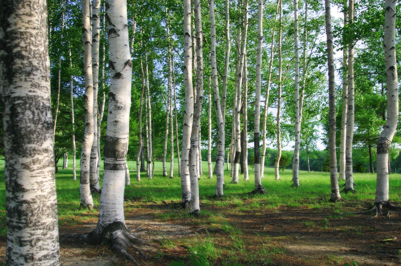 Лес и речка картинка