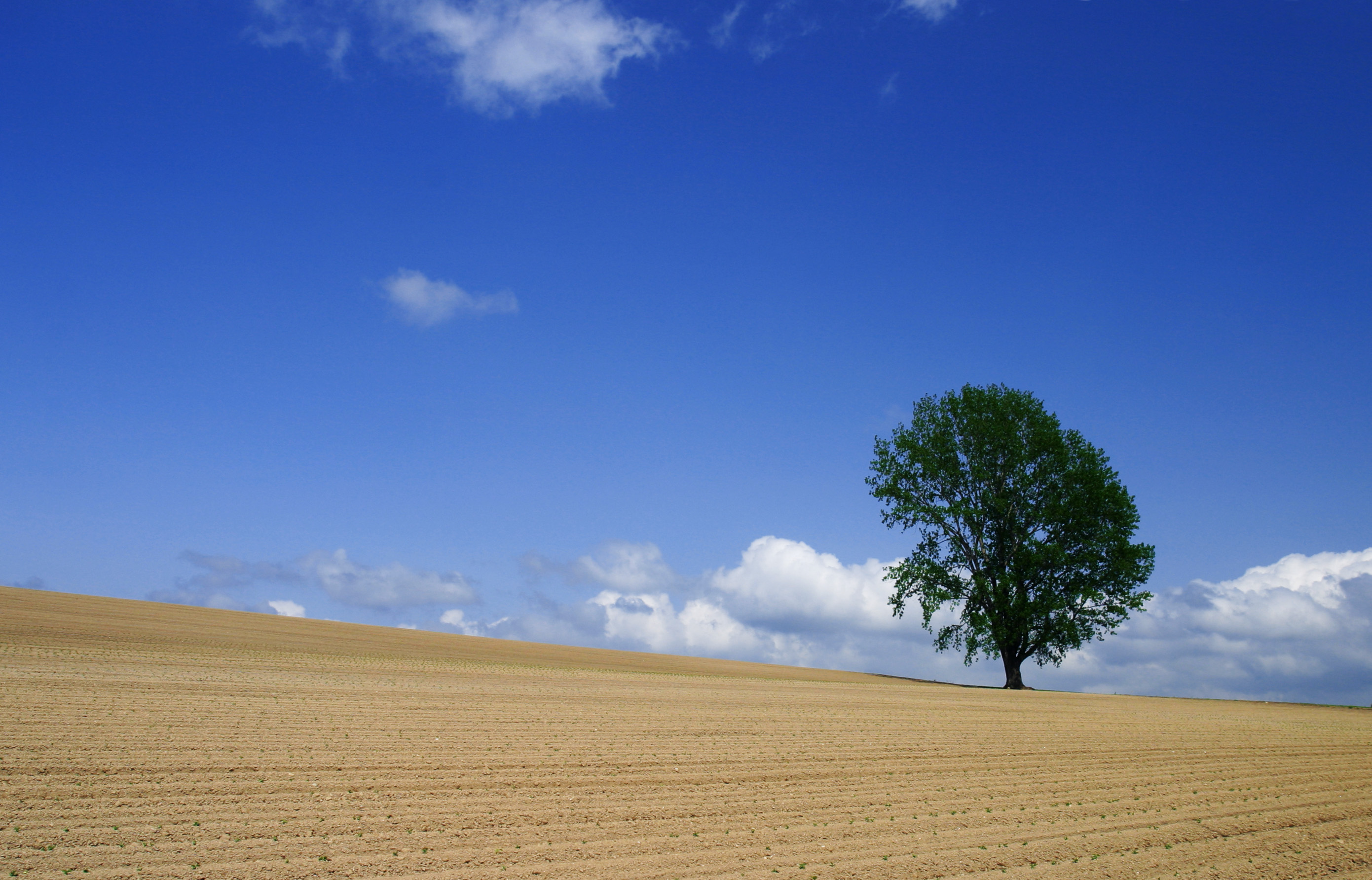 photo,material,free,landscape,picture,stock photo,Creative Commons,Summer of the tree of philosophy, field, tree, blue sky, cloud