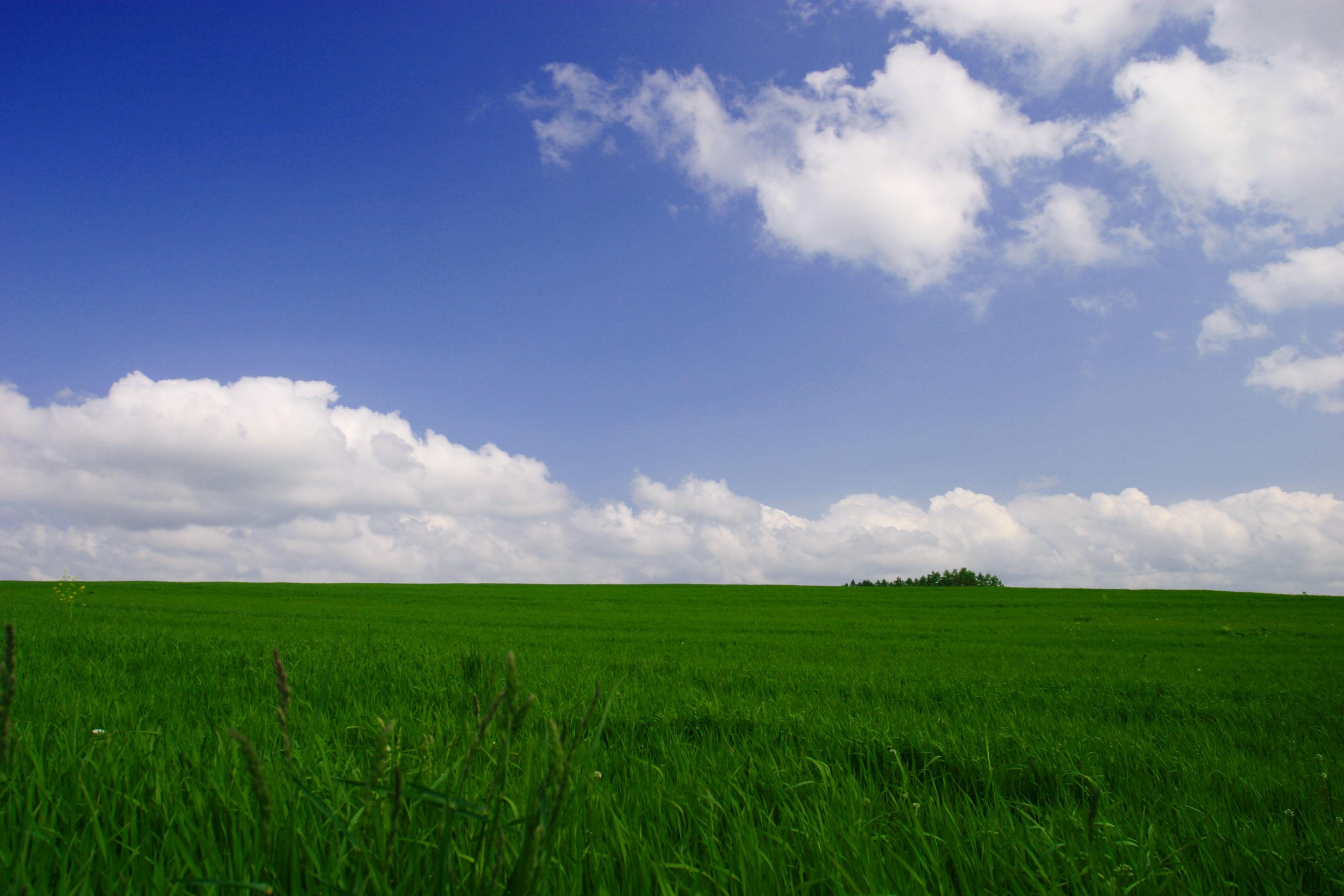 foto,tela,gratis,paisaje,fotografía,idea,Cielo azul y verdor, Pradera ...