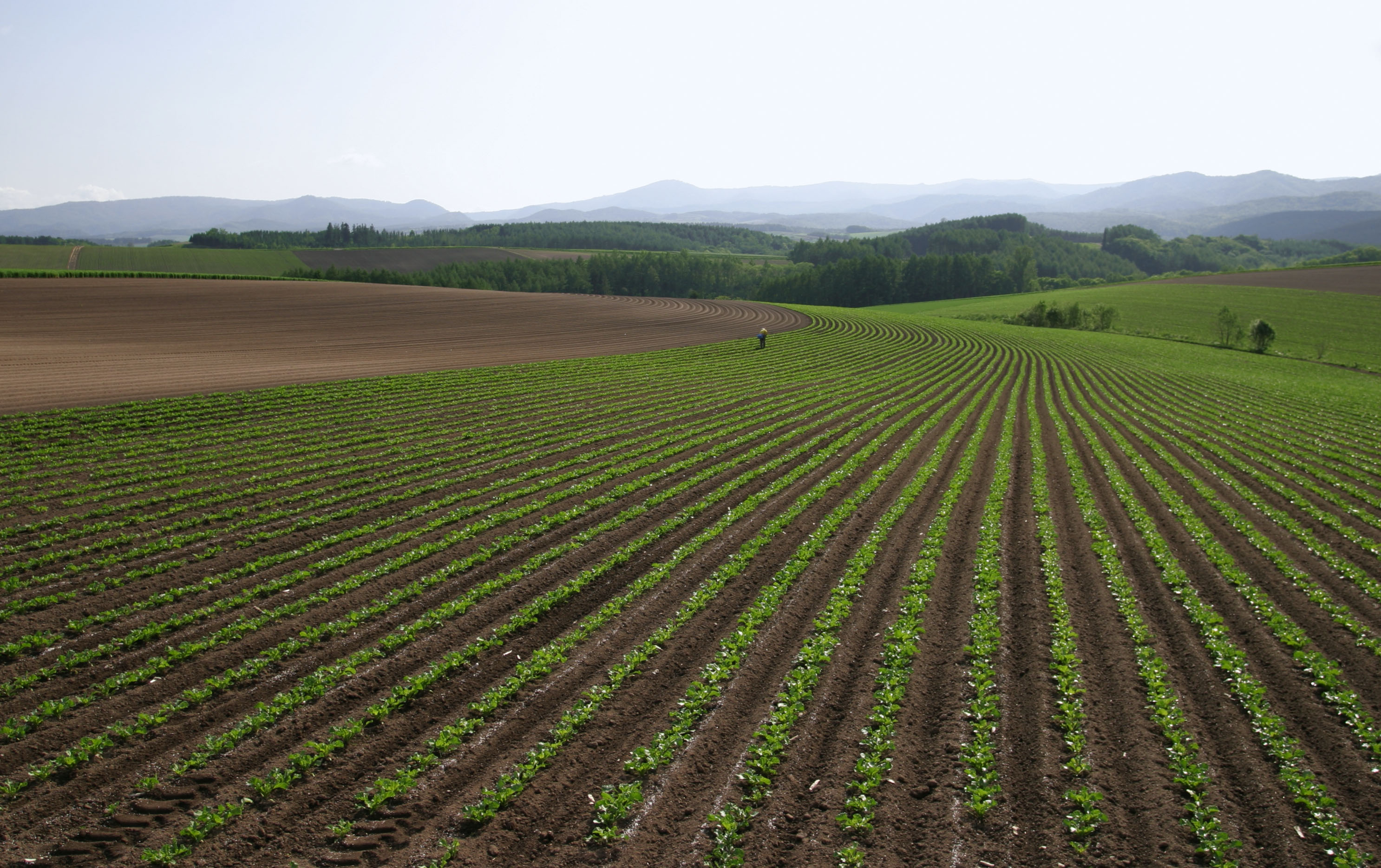 photo,material,free,landscape,picture,stock photo,Creative Commons,Extending lines, field, ridge, planting,