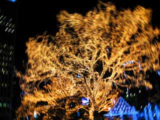 photo,material,free,landscape,picture,stock photo,Creative Commons,Illuminations, Illumination, , tree, I am colorful