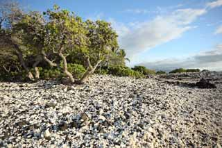 photo,material,free,landscape,picture,stock photo,Creative Commons,White and the black shore, Lava, Coral, blue sky, southern country