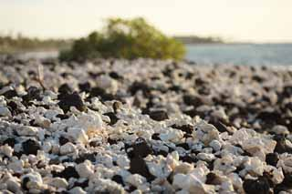 photo,material,free,landscape,picture,stock photo,Creative Commons,White and the black shore, Lava, Coral, wave, southern country
