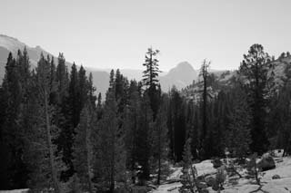 photo,material,free,landscape,picture,stock photo,Creative Commons,Back Half Dome, tree, Granite, forest, stone