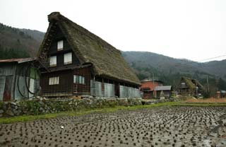 photo,material,free,landscape,picture,stock photo,Creative Commons,It is a joining its hands in prayer making in the rice field. , Architecture with principal ridgepole, Thatching, private house, rural scenery
