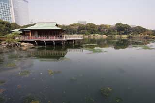 photo,material,free,landscape,picture,stock photo,Creative Commons,A resting booth of Nakashima, pond, building, I am Japanese-style, roof
