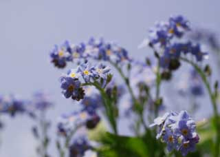 photo,material,free,landscape,picture,stock photo,Creative Commons,A bluish violet floret, Bluish violet, petal, floret, blue sky
