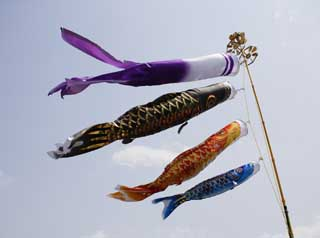 photo,material,free,landscape,picture,stock photo,Creative Commons,Swimming of a carp streamer, dark flag, Koinobori, carp streamer,