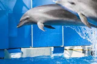 photo,material,free,landscape,picture,stock photo,Creative Commons,A dolphin jump, Is there me?, dolphin, , Spray of water