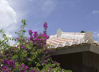 photo,material,free,landscape,picture,stock photo,Creative Commons,A bougainvillaea and a roof, roof, The plaster, tile,