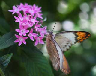 photo,material,free,landscape,picture,stock photo,Creative Commons,A meal of a butterfly, butterfly, , , flower