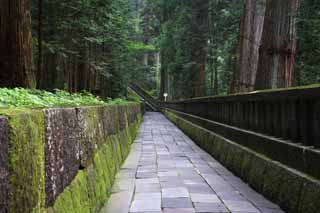 photo,material,free,landscape,picture,stock photo,Creative Commons,A stone pavement of Tosho-gu Shrine, Moss, cedar, Ishigaki, stone pavement