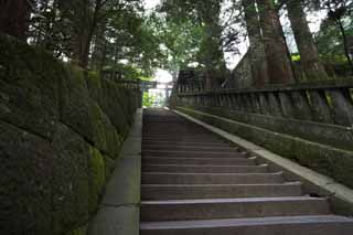 photo,material,free,landscape,picture,stock photo,Creative Commons,A stone stairway of Tosho-gu Shrine, stone stairway, Stairs, torii, cedar