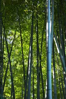 photo,material,free,landscape,picture,stock photo,Creative Commons,Bamboo, Bamboo grass, Bamboo, Section, Green