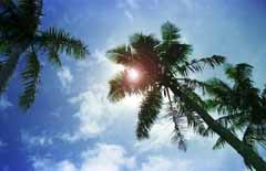photo,material,free,landscape,picture,stock photo,Creative Commons,Palm shade (improved), sun, blue, ,