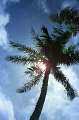 photo,material,free,landscape,picture,stock photo,Creative Commons,Palm tree in the sun, sun, blue, ,