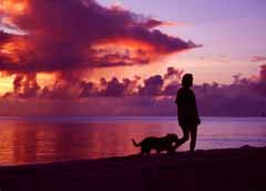 photo,material,free,landscape,picture,stock photo,Creative Commons,Walk in the evening, setting sun, cloud, dog, sea
