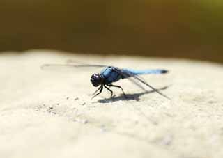 photo,material,free,landscape,picture,stock photo,Creative Commons,Dragonfly, dragonfly, , Light blue, feather