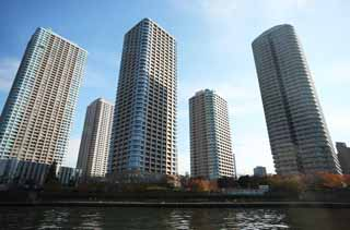 photo,material,free,landscape,picture,stock photo,Creative Commons,High-rise apartment group of Tsukuda, high-rise building, Sumida River descent, house, An apartment