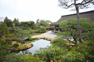 photo,material,free,landscape,picture,stock photo,Creative Commons,Ninna-ji Temple north garden, Five Storeyed Pagoda, I am Japanese-style, pond, style of Japanese garden with a pond in the center garden