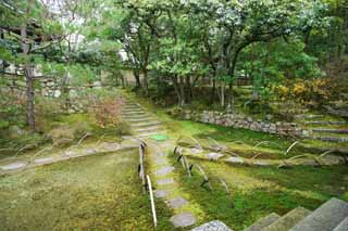 photo,material,free,landscape,picture,stock photo,Creative Commons,Ninna-ji Temple soul Akira, Moss, stone stairway, The sidewalk, Walk