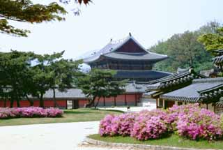 photo,material,free,landscape,picture,stock photo,Creative Commons,Injeongjeon, palace, azalea, ,