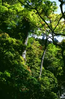 photo,material,free,landscape,picture,stock photo,Creative Commons,Tender bright green, Ginkakuji, tree, ,