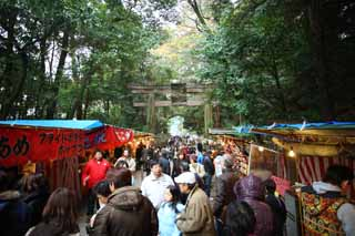 photo,material,free,landscape,picture,stock photo,Creative Commons,Ishigami major shrine approach to a shrine, The Japanese Chronicle of Japan, description of folk history, torii, stand