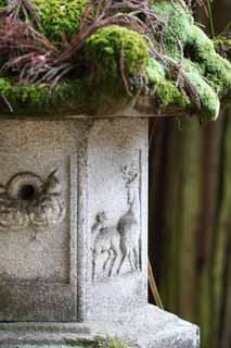 photo,material,free,landscape,picture,stock photo,Creative Commons,Ishigami major shrine stone lantern, The Japanese Chronicle of Japan, description of folk history, Relief, deer