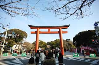 photo,material,free,landscape,picture,stock photo,Creative Commons,Hachiman-gu Shrine approach to a shrine, torii, New Year's visit to a Shinto shrine, An approach to a shrine, pedestrian crossing