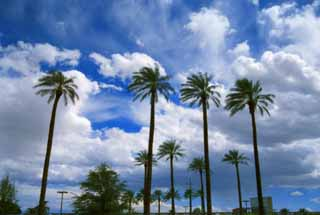 photo,material,free,landscape,picture,stock photo,Creative Commons,Wind in an oasis, blue sky, palm, cloud,