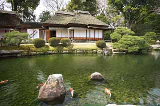 photo,material,free,landscape,picture,stock photo,Creative Commons,Koraku-en Garden Renchiken, shoji, Japanese-style building, straw-thatched roof, carp