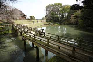 photo,material,free,landscape,picture,stock photo,Creative Commons,The pond of the Koraku-en Garden floral leaf, bridge, I am wooden, railing, Japanese garden